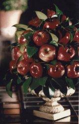 garden party fruit centerpiece