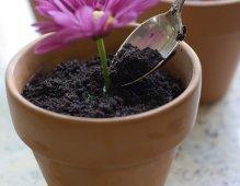 alice in wonderland flower pot desserts