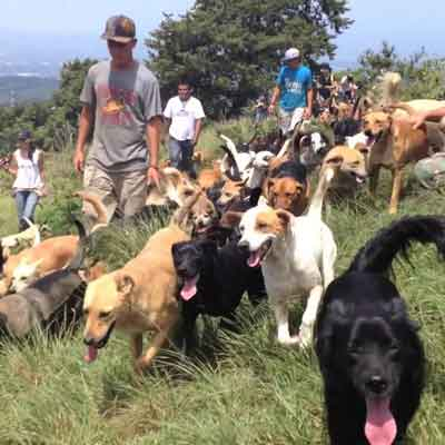Hiking with Adoptable Dogs