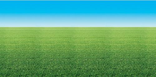 field backdrop