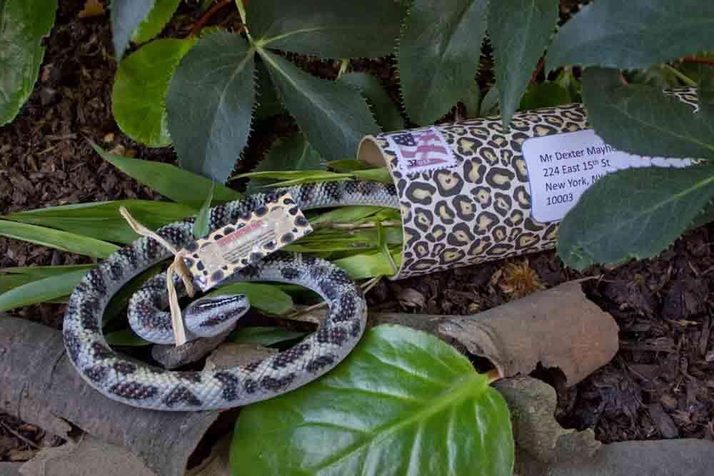 create invitations jungle invitation