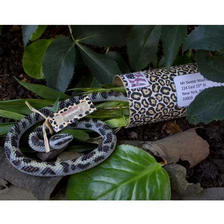 snake invitation