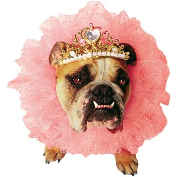 princess dog costume