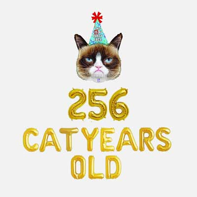 256 cat years old balloons
